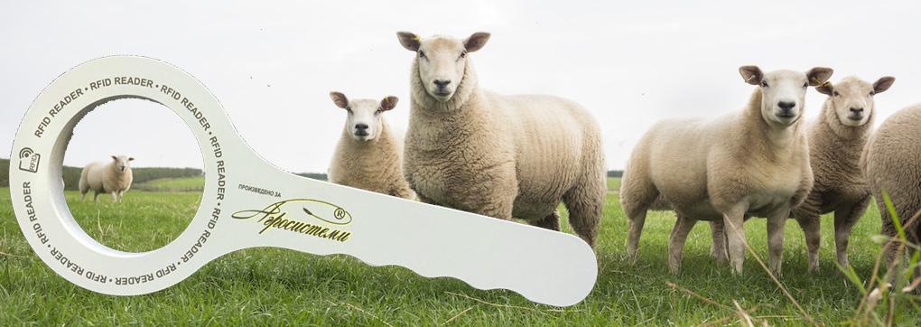 sheep_goats.jpg